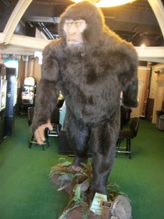 Sasquatch Casino in Black Hawk, Colorado