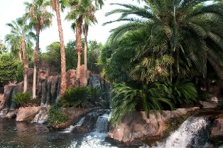 The grounds near the pools at the Flamingo Las Vegas